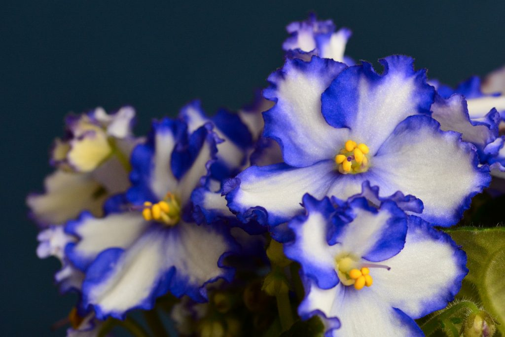February ~ Violet