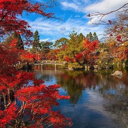 wood-bridge-fall-leaves-autumn
